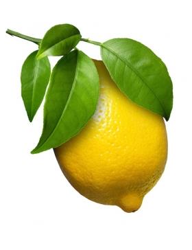 Citron Feuilles non traités...