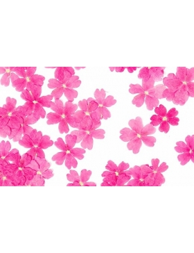Fleurs séchées Verveine Rose 50 unités