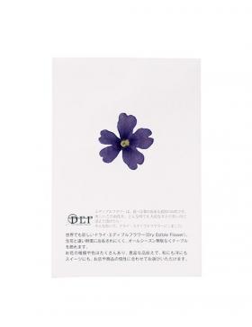 Fleurs séchées Verveine Bleue 50 unités