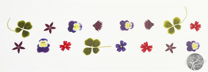 Fleurs séchées comestibles - Epicerie Fine Koros.ch