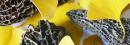Champignons, Truffes & Marrons